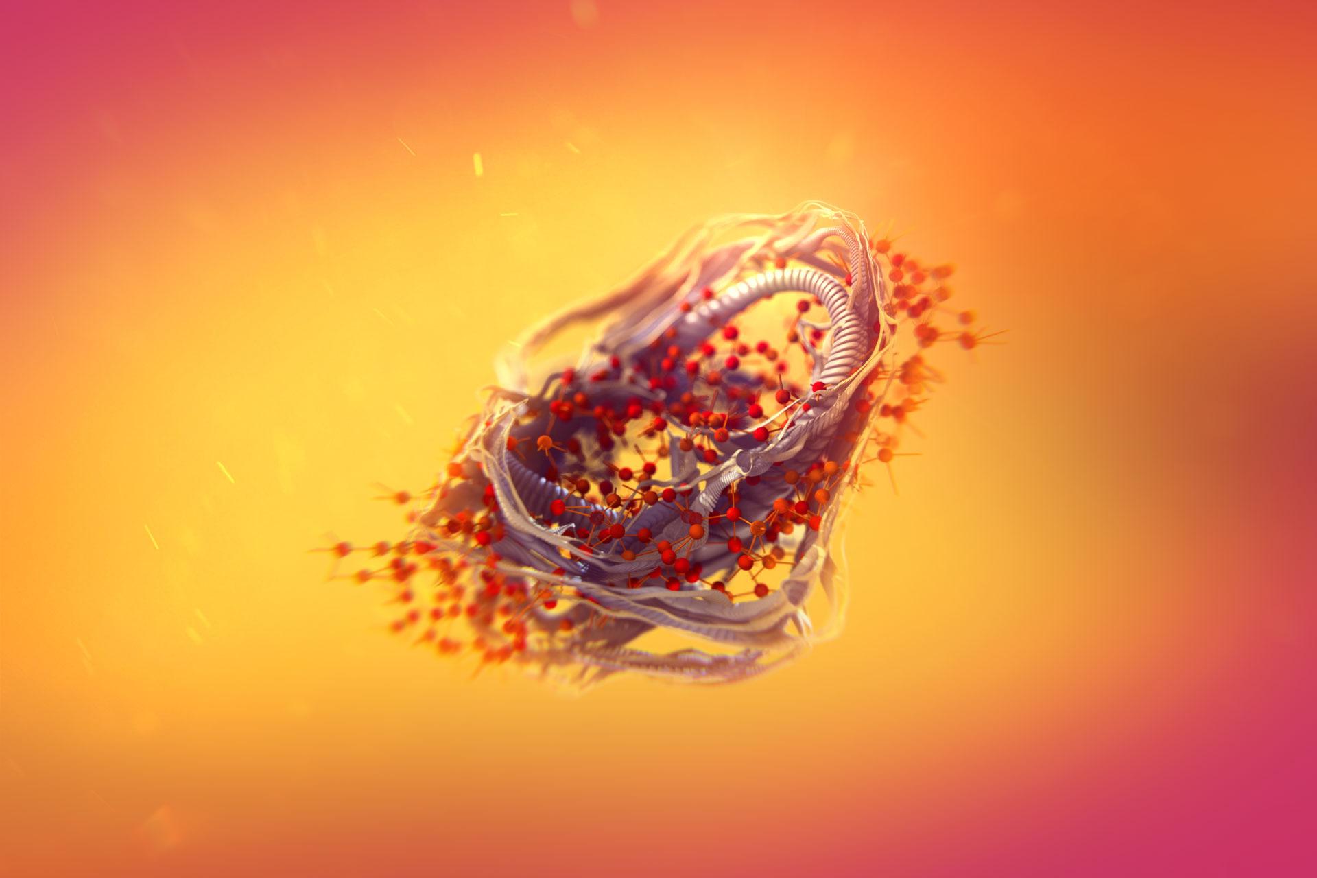 Protein–Quercetin