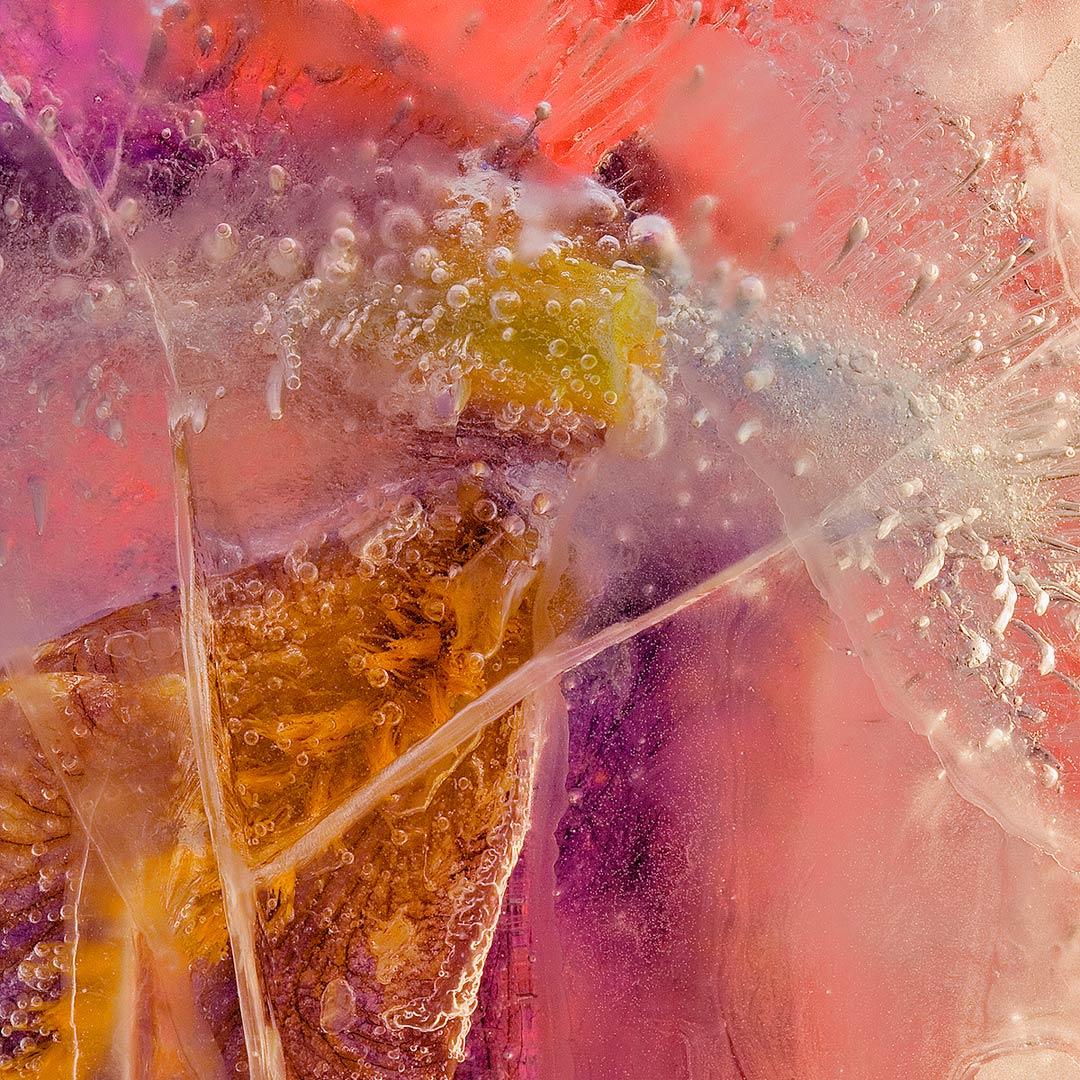frozen-iris-germanica-02-details6