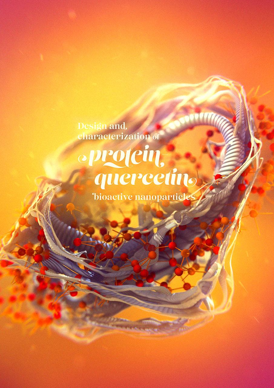 protein-quercetin-04a